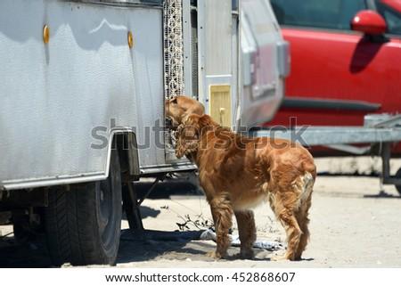 Dog and caravan on the beach - stock photo