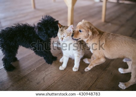 Dog and cat best friends playing together. Lifestyle photography - stock photo
