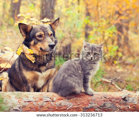 Dog and cat best friends sitting together outdoors in autumn forest - stock photo