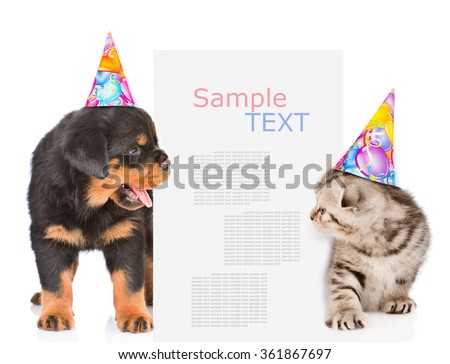 Dog and cat in birthday hats peeks out from behind the billboard and looking at text. isolated on white background - stock photo