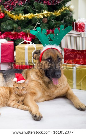 dog and cat in Christmas night - stock photo