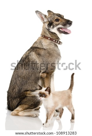 dog and cat. isolated on white background - stock photo