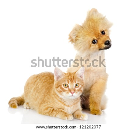 dog and cat look in the camera. isolated on white background - stock photo