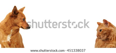 Dog and cat looking sideway on each other, Head shots - stock photo