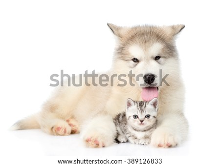 Dog and cat lying together. isolated on white background - stock photo