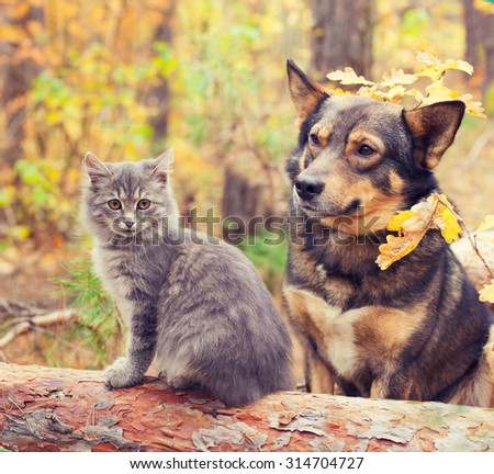 Dog and cat outdoors in autumn forest - stock photo