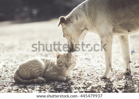 Dog and cat playing  - stock photo