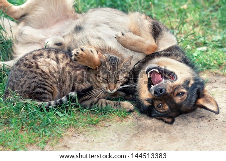 Dog and cat playing on the grass - stock photo