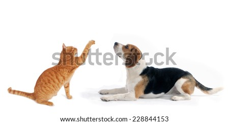 dog and cat side portraits sit and lying down  looking up, on white isolated background  - stock photo