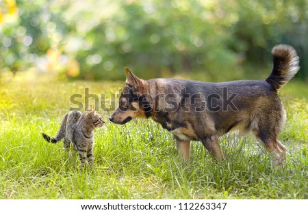 Dog and cat sniffing each other - stock photo