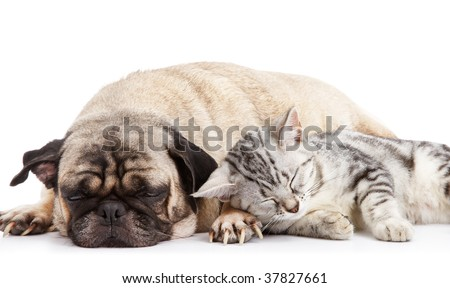 dog and cat taking a nap together - stock photo