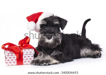 dog and cat wearing a santa hat - stock photo