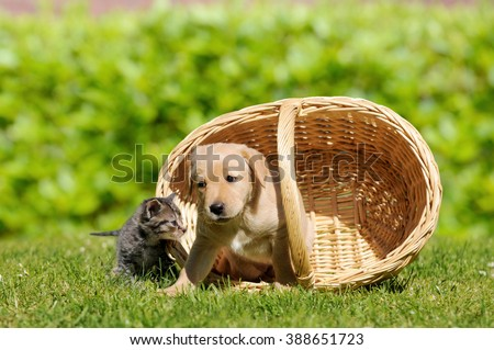 Dog and cat with basket on meadow - stock photo