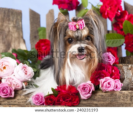 dog and flowers - stock photo
