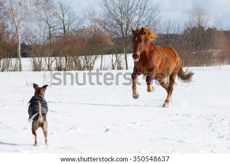 Dog and horse playing together in a pasture - stock photo