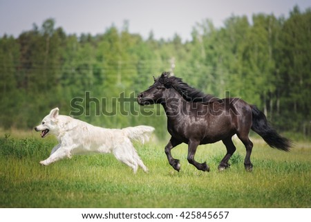 dog and horse running together on a field - stock photo