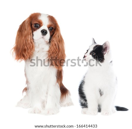 dog and kitten - stock photo