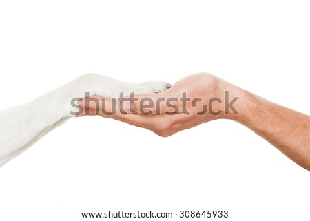 dog and owner handshaking or shaking hands  in a perfect balance,  isolated on white background - stock photo