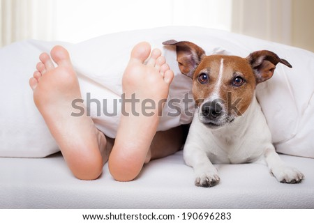 dog and owner under bed sheet relaxing - stock photo