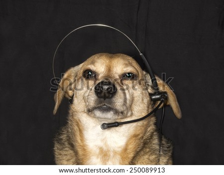 dog and phone - stock photo