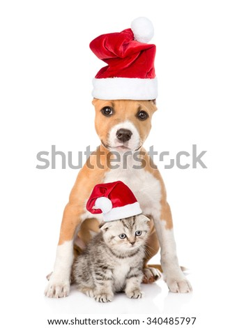 dog and small cat in red christmas hats sitting together. isolated on white background - stock photo