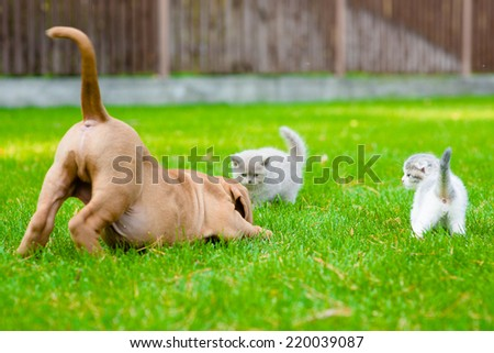 Dog and two kittens playing together outdoor - stock photo