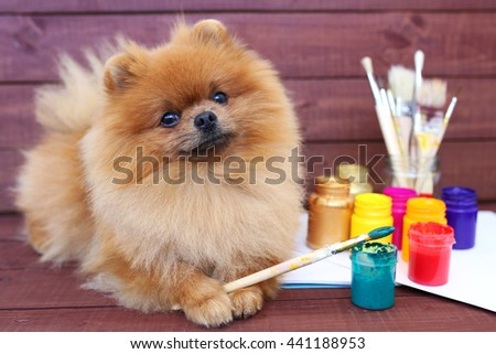 Dog artist. Beautiful pomeranian dog with paints and brushed on wooden background. Clever spitz - stock photo