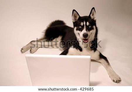 dog at computer - stock photo