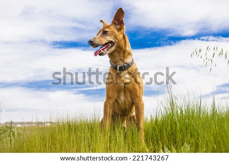 Dog at spring field - stock photo
