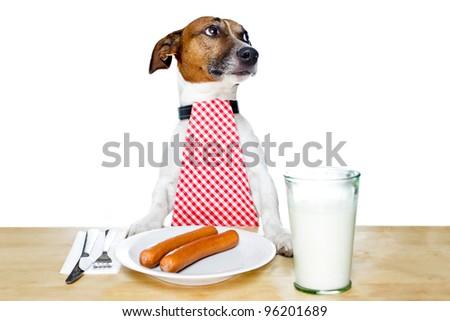dog at table - stock photo