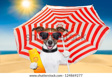 dog at the beach under red and white umbrella with sunscreen - stock photo