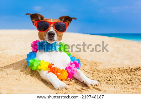 dog at the beach with a flower chain at the ocean shore wearing sunglasses - stock photo