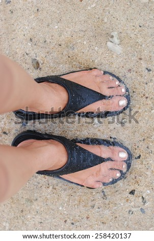 dog beach sea shoes woman water walking pet wall background - stock photo