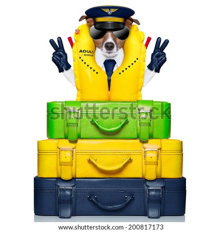 dog  behind of luggage as an airline captain with life vest - stock photo