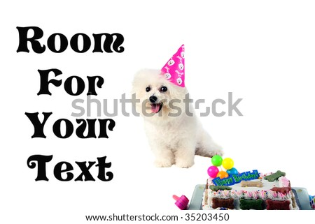 dog birthday isolated on white room for text - stock photo