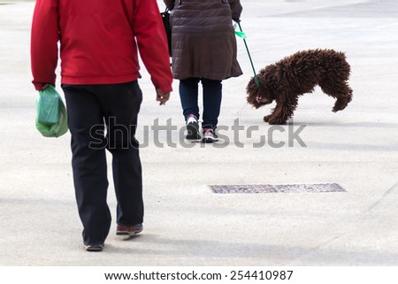 dog bites in the leash while walking in the city - stock photo