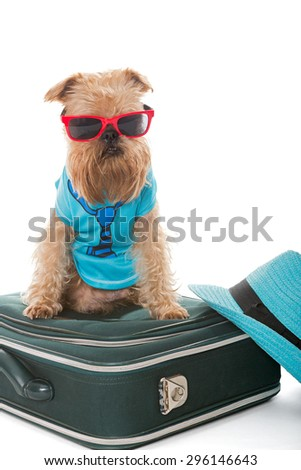 Dog breed Brussels Griffon and a travel suitcase, isolated on white - stock photo
