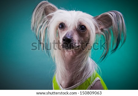 dog breeds, cute, small, hand-held, puppy - stock photo