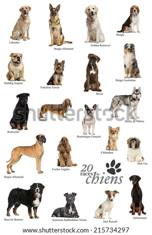 Dog breeds poster in French - stock photo
