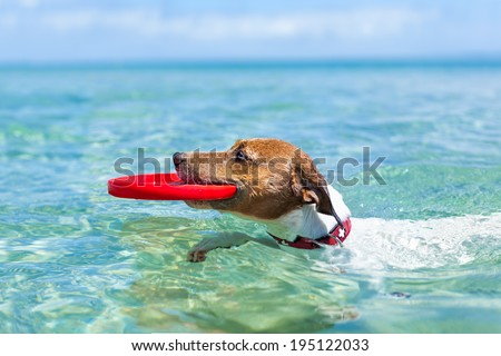 dog catching a red  flying disc and swimming in water - stock photo