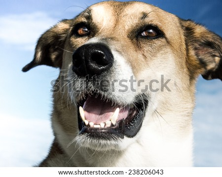 dog  close-up - stock photo