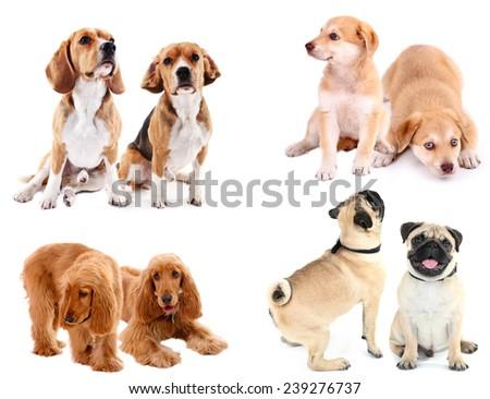 Dog collage - stock photo