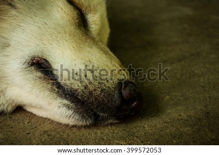 dog concept.dog sleeping.dog puppy sleeping on floor.Grey Sleeping Dog.stray dog resting on concrete wall.dog lying on the floor.puppy sleeping on the ground - stock photo