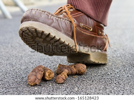 Dog crap. - stock photo
