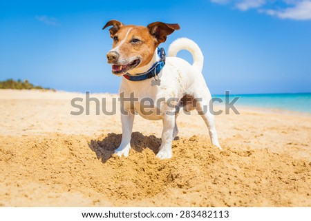 dog digging a hole in the sand at the beach on summer holiday vacation, ocean shore behind - stock photo