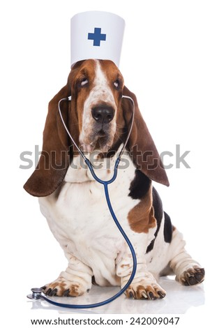 dog dressed as a doctor - stock photo