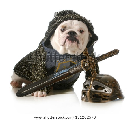 dog dressed up as a knight isolated on white background - english bulldog - stock photo