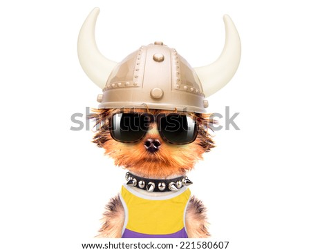 dog dressed up as a viking on a white background - stock photo