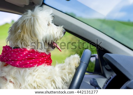 Dog driving a steering wheel in a car - stock photo