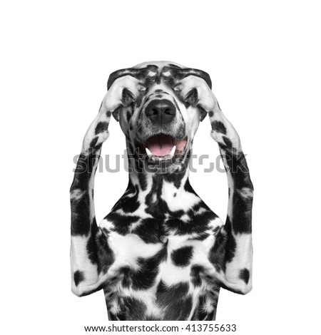 dog ears closed his eyes and hid -- isolated on white background - stock photo